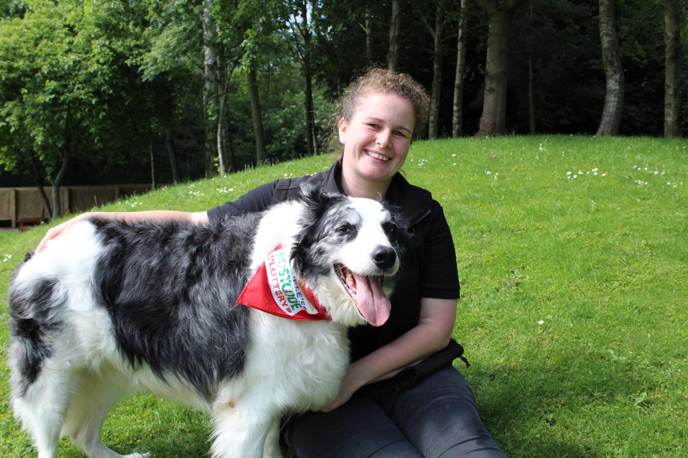 Dog lovers urged to sign up to become foster families