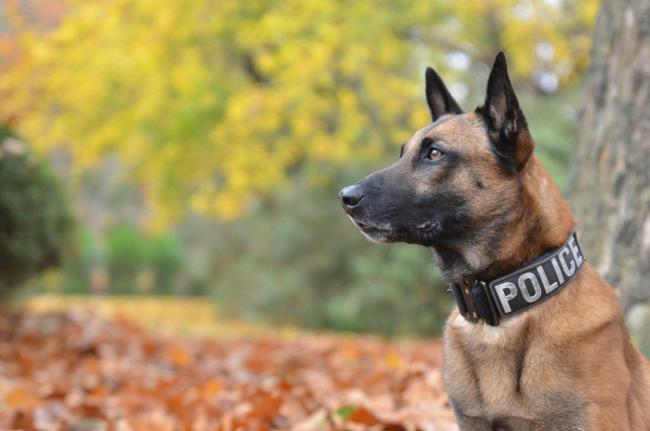 Police dog died after being left in sweltering police car for two and a half hours