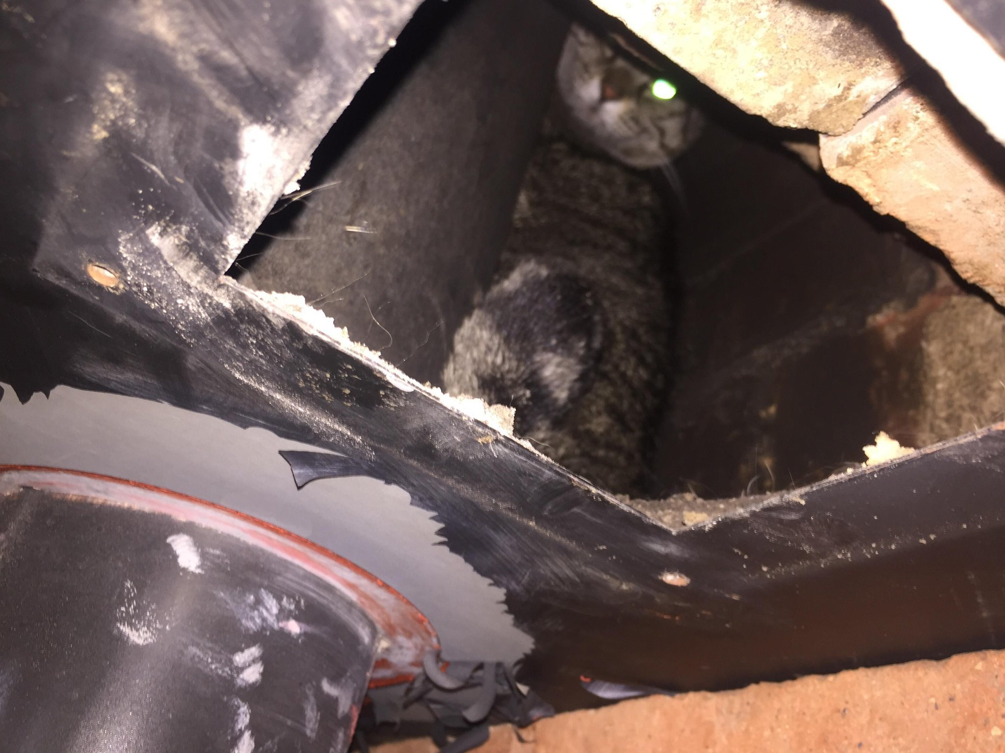 Beloved cat reported missing for nine days is rescued by firefighters from chimney breast