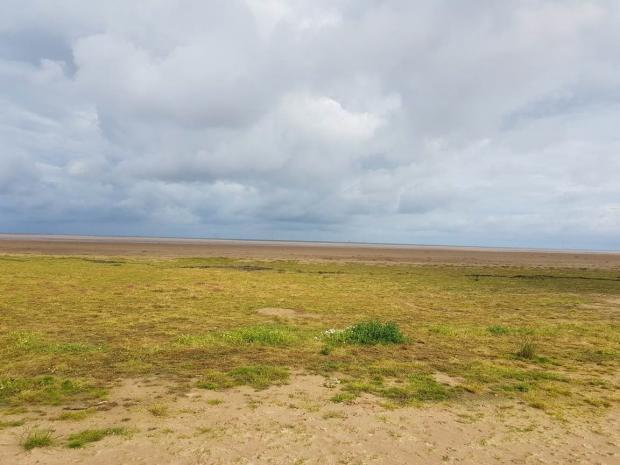 Hoylake beach covered with grass. Picture by Jade Waddington