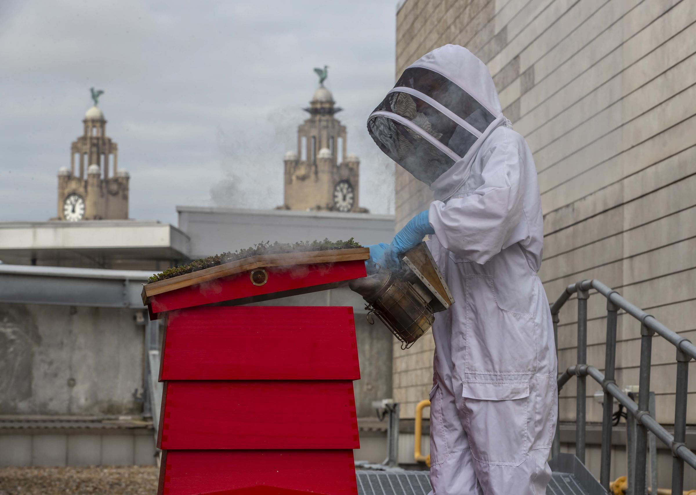 Two new beehives arrive at Liverpool ONE