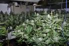 Cannabis farm that was found at house in Elmswood Road, Prenton
