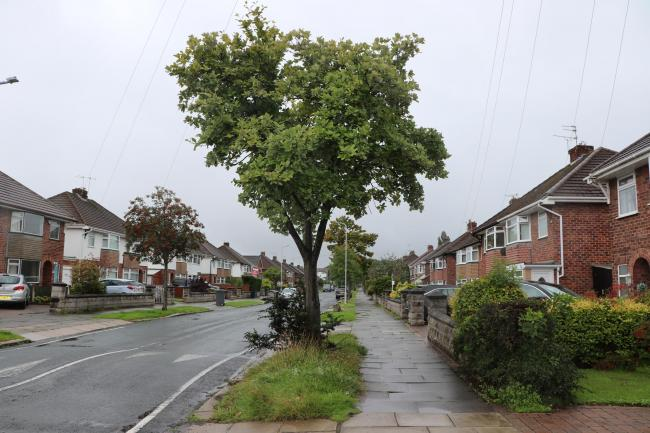 The new equipment will help Wirral Council to identify decaying trees more easily