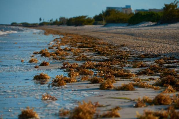 Wirral Globe: Sunshine and seaweed (iStock/PA)