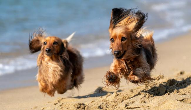How to keep your dog safe from harmful oil on beaches