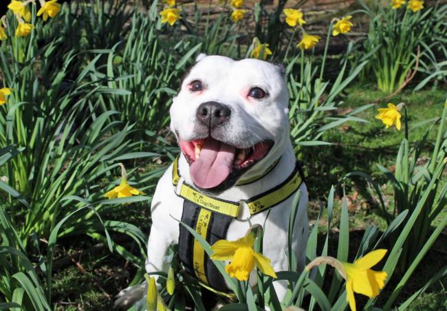 Can you give beautiful Bruno aforever home?