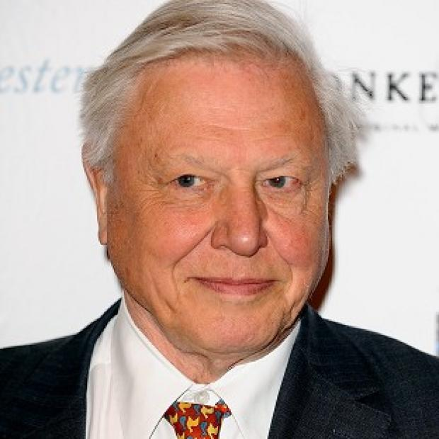 Sir David Attenborough is in the running for a TV Bafta