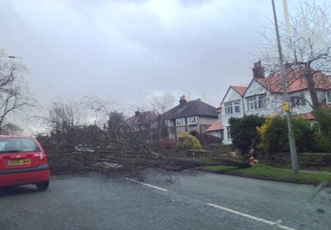 This picture of a tree blown across Kings Road in Bebington was sent in by a Globe reader today