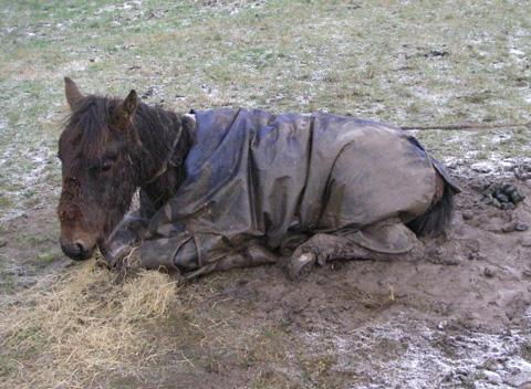 Increase in cruelty to horses in Wirral - RSPCA. Picture courtesy of RSPCA.