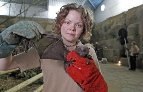 Keepers at Chester Zoo take on bi-annual 'bat catch'
