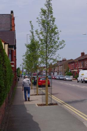 By April this year, more than 600 trees across 8km will have been planted in streets and green spaces as part of Wirral Green Streets.
