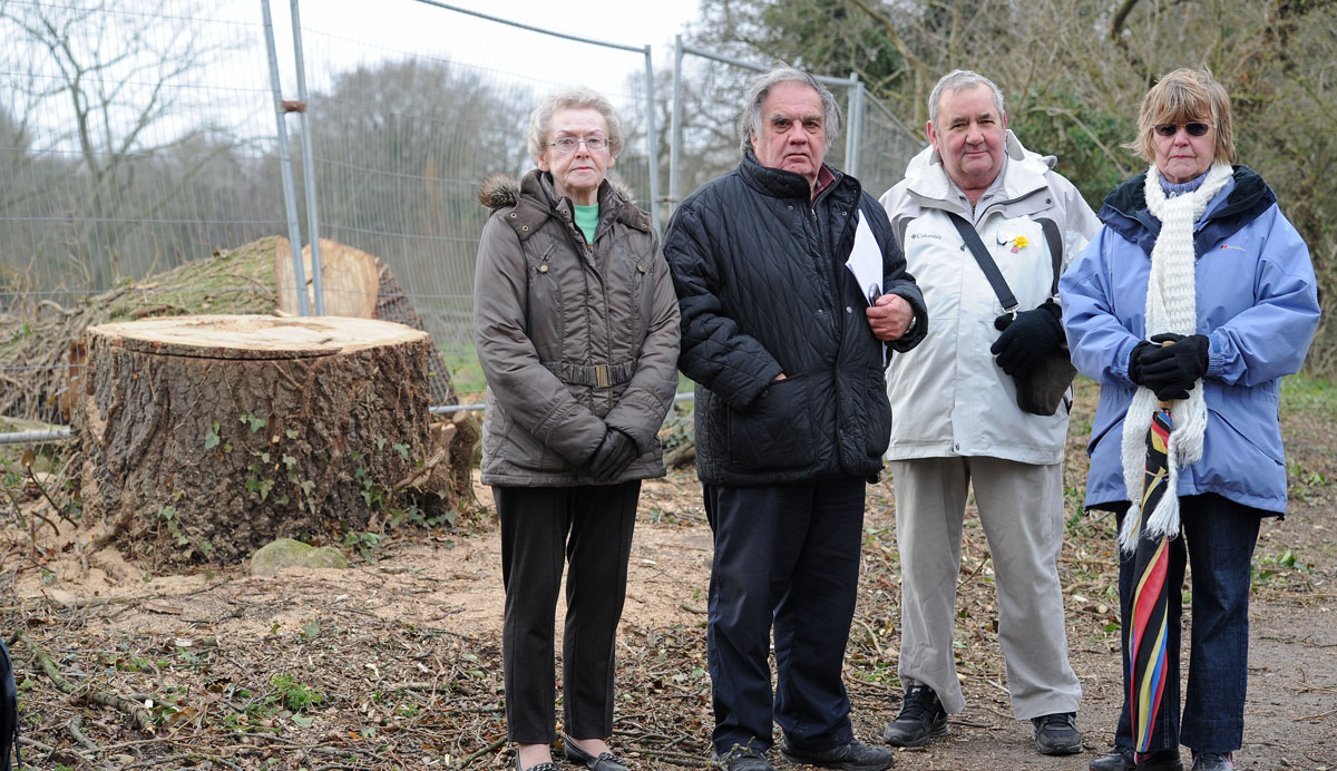 Felling of 400-year-old tree as part of £1bn power cable scheme is 'scandalous'