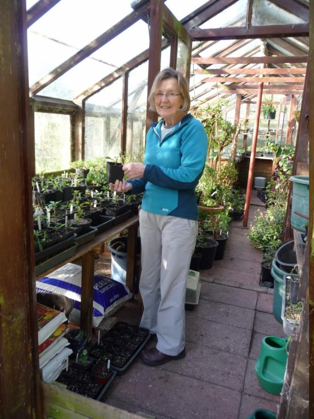 Wirral Globe: Liz Carter prepares for the garden opening.