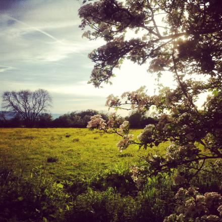 SNAPPED BY YOU: Neston marsh
