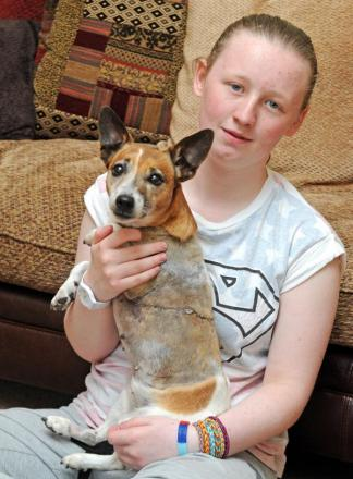 Fifteen-year-old Adele Whitaker with Stich, the Jack Russell savaged in the park