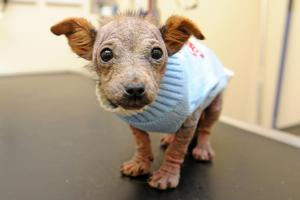 Puppy dumped in plastic bag was going to be 'set alight', according to Wirral vet