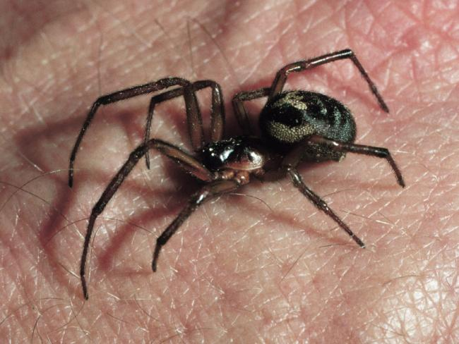 9 spiders you might see a lot more of in September