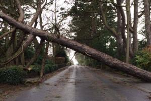 A fallen tree blocked Quarry Road East in Heswall on Thursday afternoon. Picture sent in by Cal Dugdill