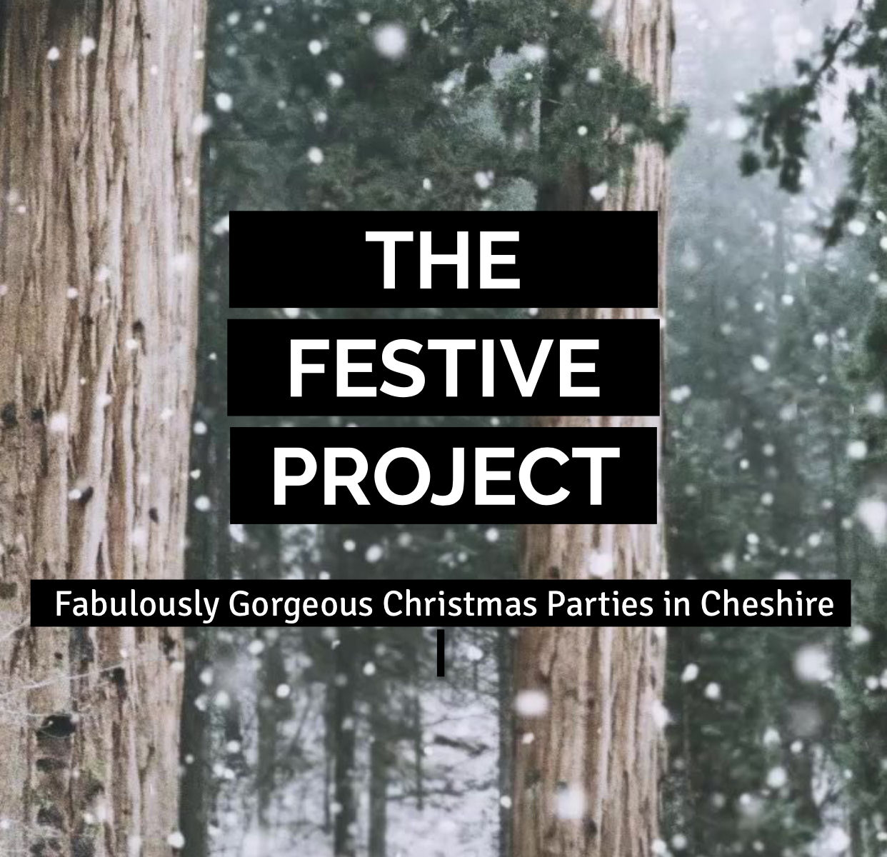 The Festive Project - Thursday 30th November
