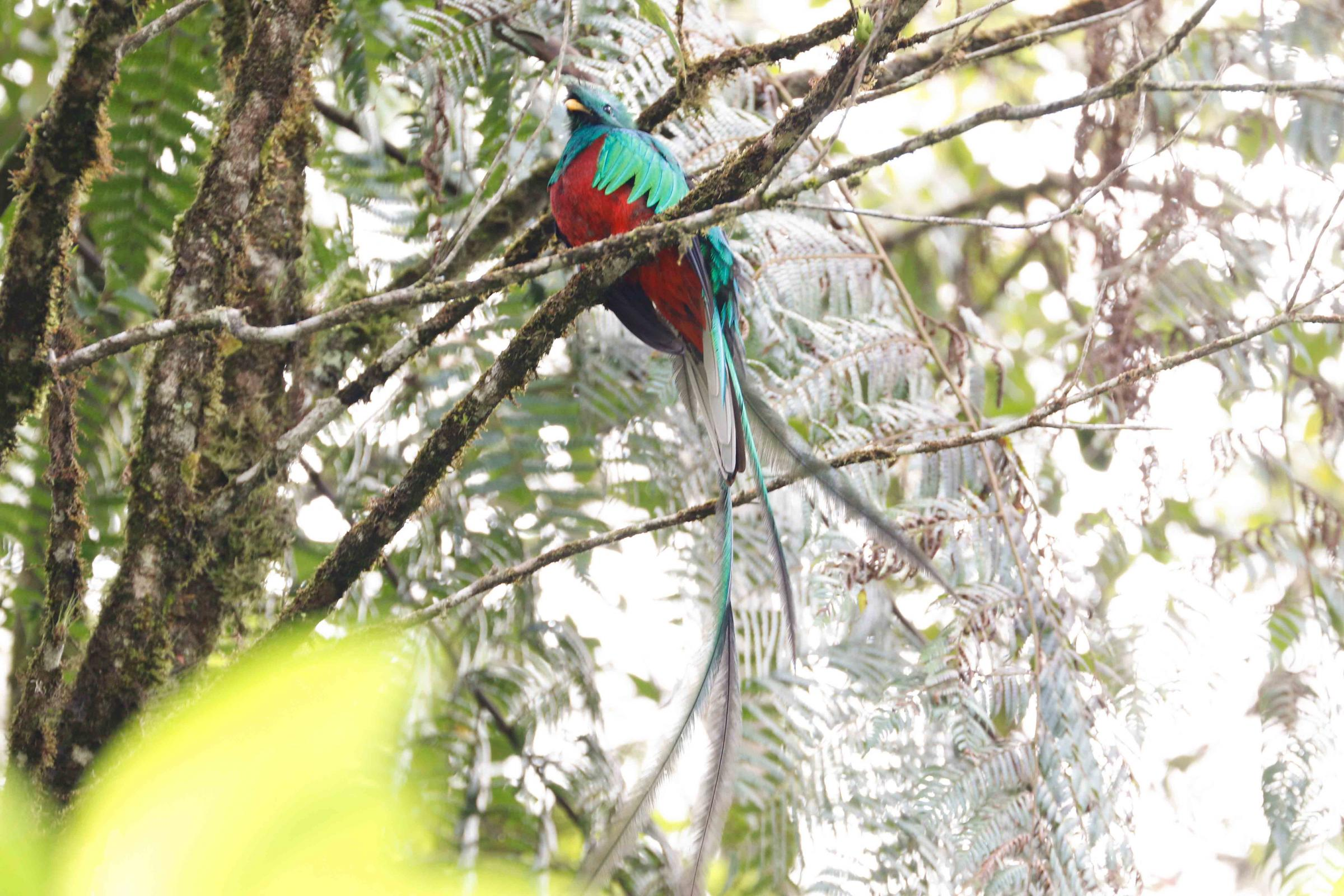 "Wirral Bird Club - ""Guatemala - Land of Quetzals and the Mayans"" - Barrie Cooper"