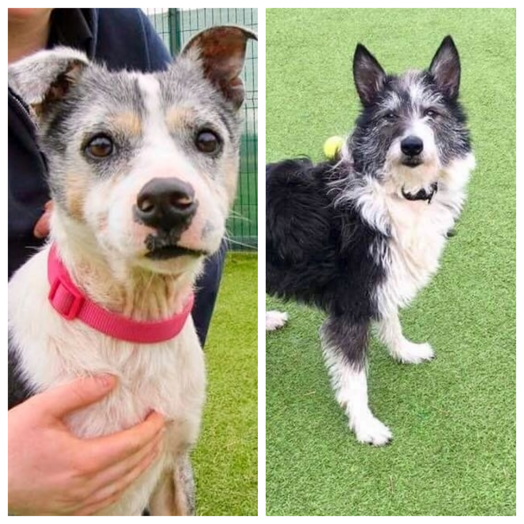 Custard and Tippy will appear on Channel Five's 'Dog Rescuers' tonight