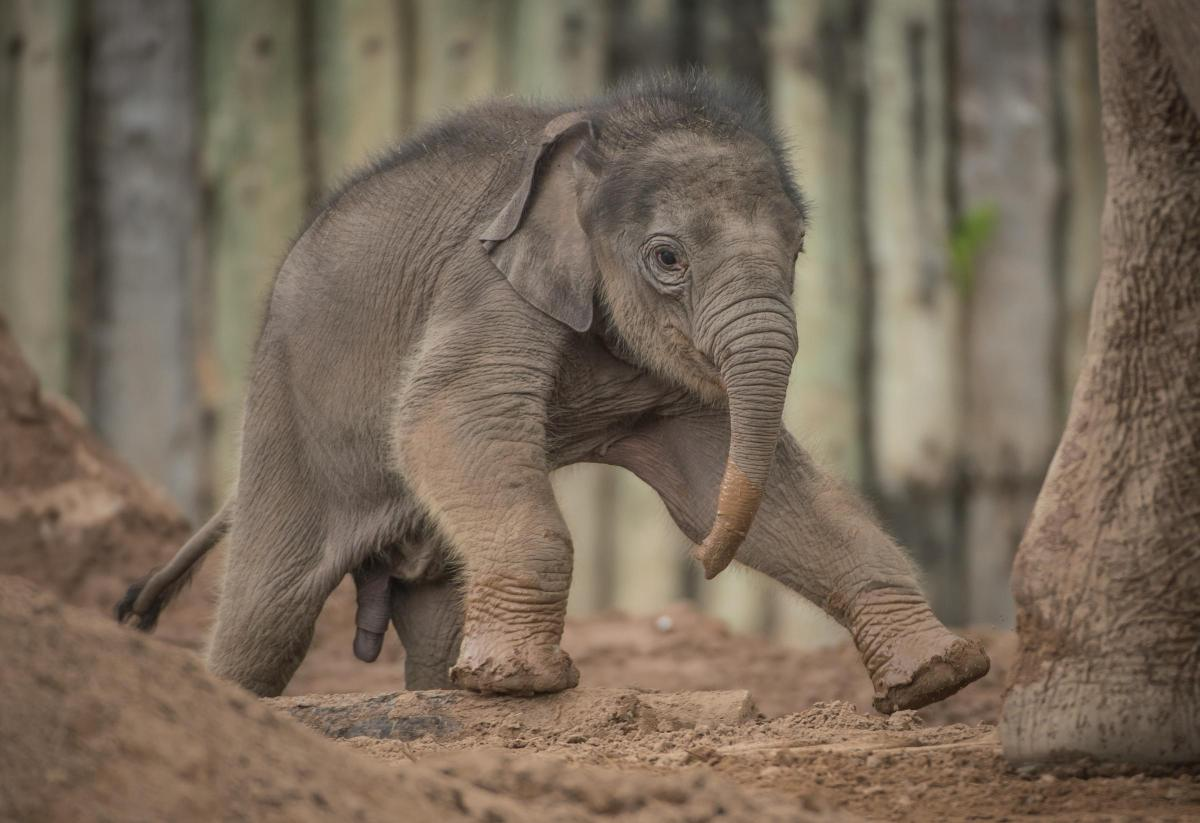 Image result for chester zoo