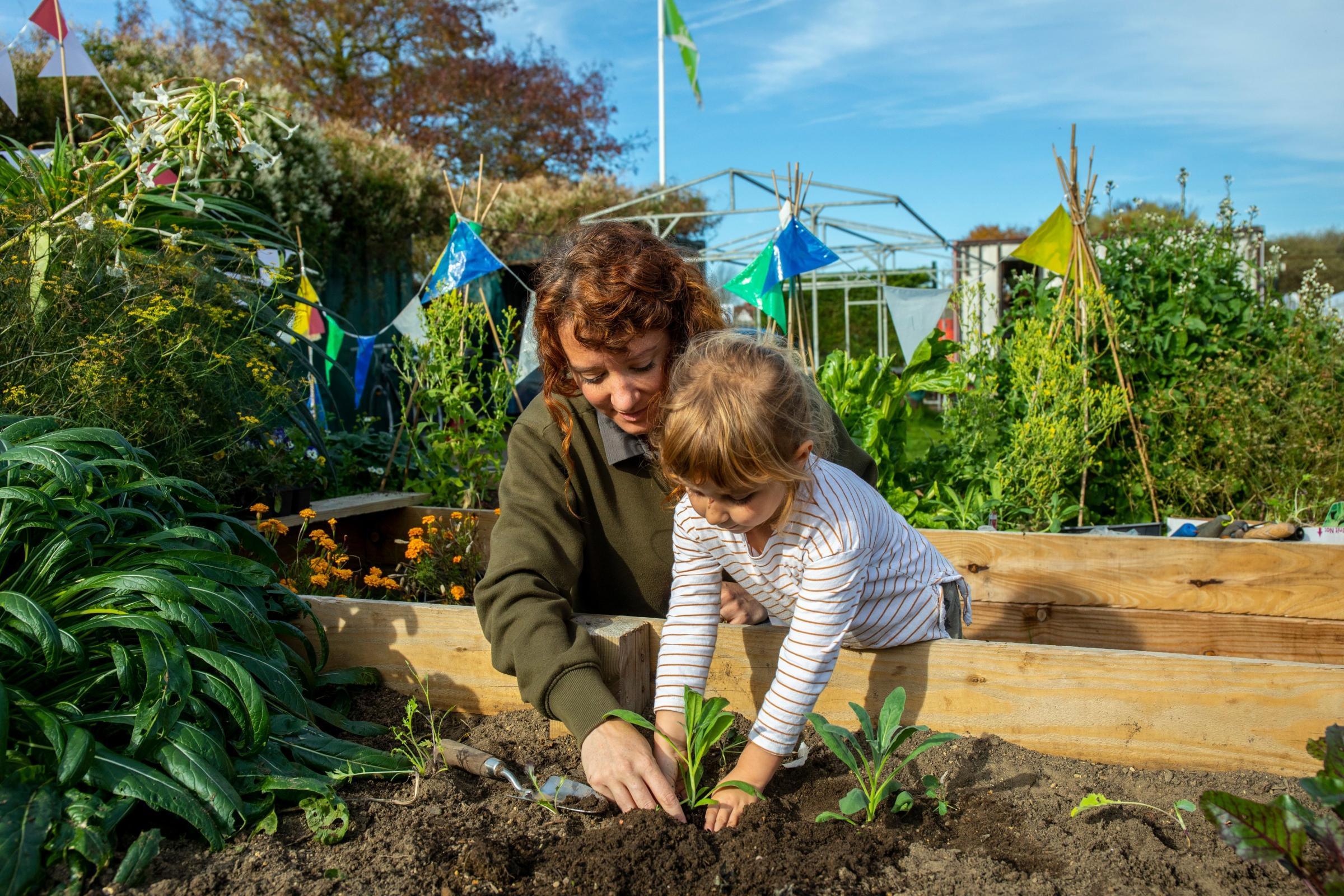 How community projects can receive £500 worth of plants or equipment from RHS