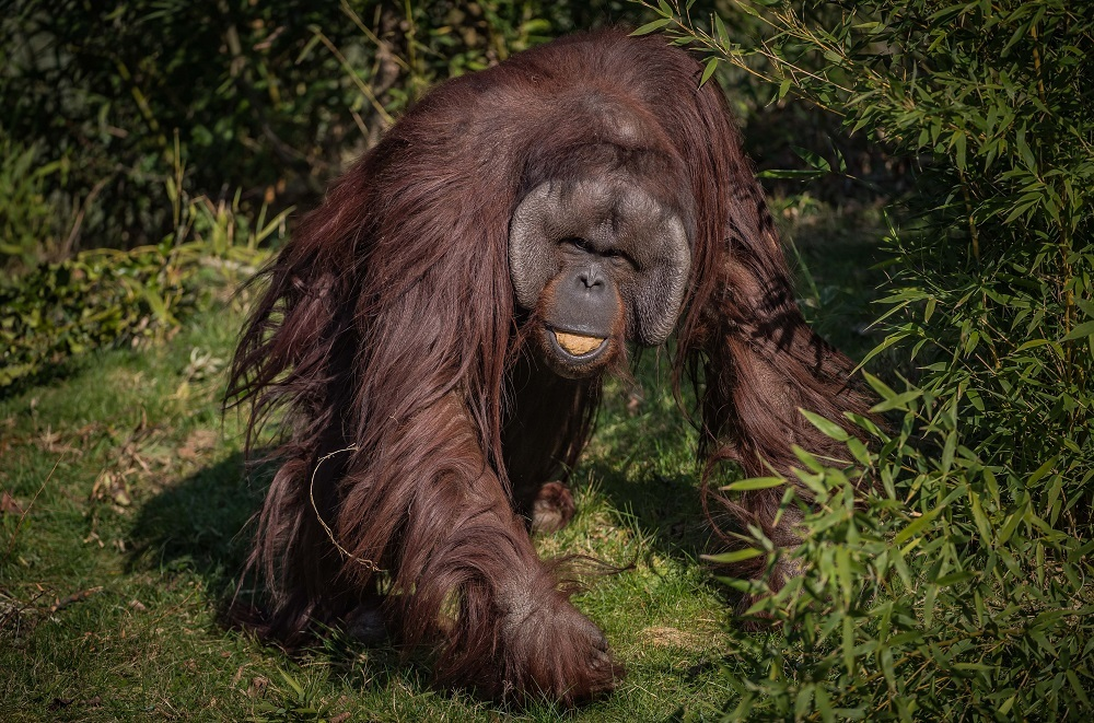 Chester Zoo expert advises EU committee on the world's palm oil crisis
